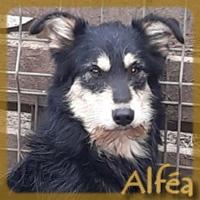 Affiche des chiens à l'adoption  A PARTAGER * IMPRIMER * DIFFUSER Vignet32