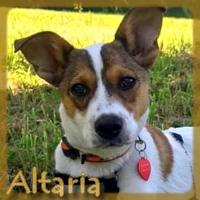 Affiche des chiens à l'adoption  A PARTAGER * IMPRIMER * DIFFUSER Vignet33