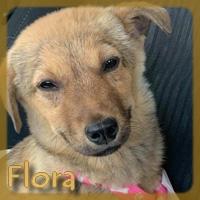 Affiche des chiens à l'adoption  A PARTAGER * IMPRIMER * DIFFUSER Vignet35