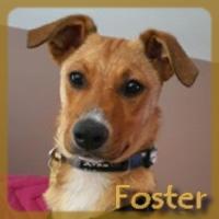 Affiche des chiens à l'adoption  A PARTAGER * IMPRIMER * DIFFUSER Vignet36