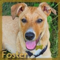 Affiche des chiens à l'adoption  A PARTAGER * IMPRIMER * DIFFUSER Vignet37