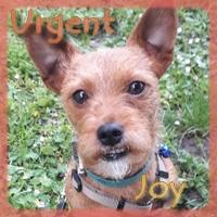 Affiche des chiens à l'adoption  A PARTAGER * IMPRIMER * DIFFUSER Vignet38