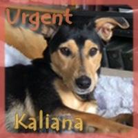 Affiche des chiens à l'adoption  A PARTAGER * IMPRIMER * DIFFUSER Vignet39