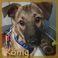 Affiche des chiens à l'adoption  A PARTAGER * IMPRIMER * DIFFUSER Vignet40