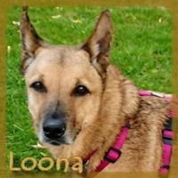 Affiche des chiens à l'adoption  A PARTAGER * IMPRIMER * DIFFUSER Vignet41