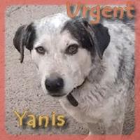Affiche des chiens à l'adoption  A PARTAGER * IMPRIMER * DIFFUSER Vignet42