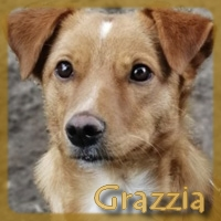 Affiche des chiens à l'adoption  A PARTAGER * IMPRIMER * DIFFUSER Vignet44