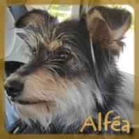 Affiche des chiens à l'adoption  A PARTAGER * IMPRIMER * DIFFUSER Vignet50