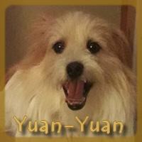 Affiche des chiens à l'adoption  A PARTAGER * IMPRIMER * DIFFUSER Yuan_y10