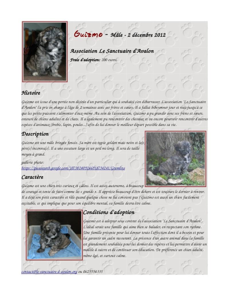 6 chiots à adopter mi-février et demande de dons Ficheg10