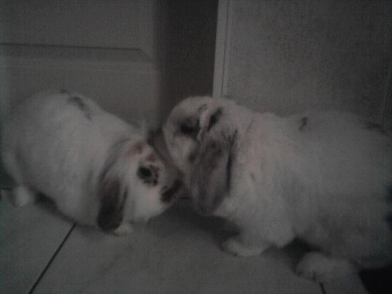 lilou, lapine bélier née en avril 2011 - Page 4 12099_10