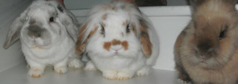 lilou, lapine bélier née en avril 2011 - Page 4 Pict0010