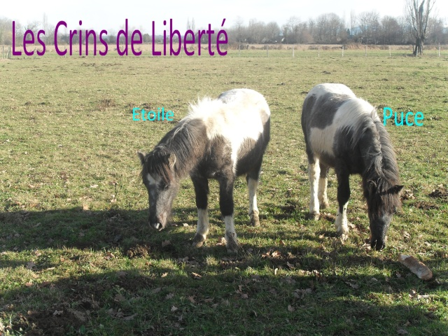 PUCE, ponette ONC, Sauvée par Clara (Janv 2013/2020) - Page 4 Sdc11110
