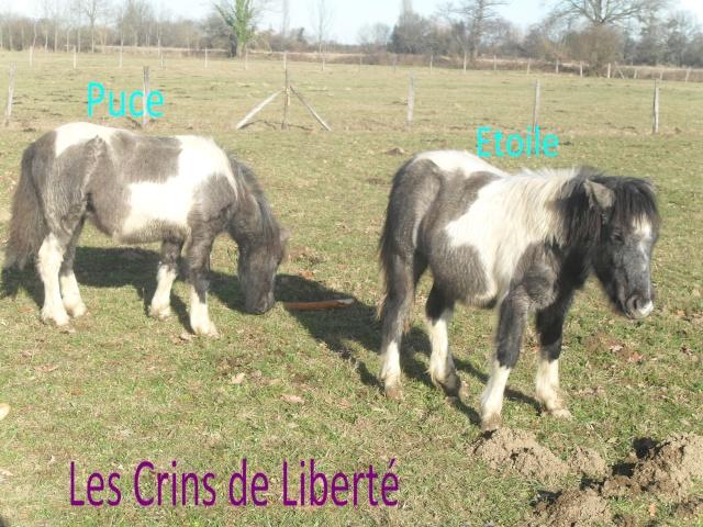 PUCE, ponette ONC, Sauvée par Clara (Janv 2013/2020) - Page 4 Sdc11111