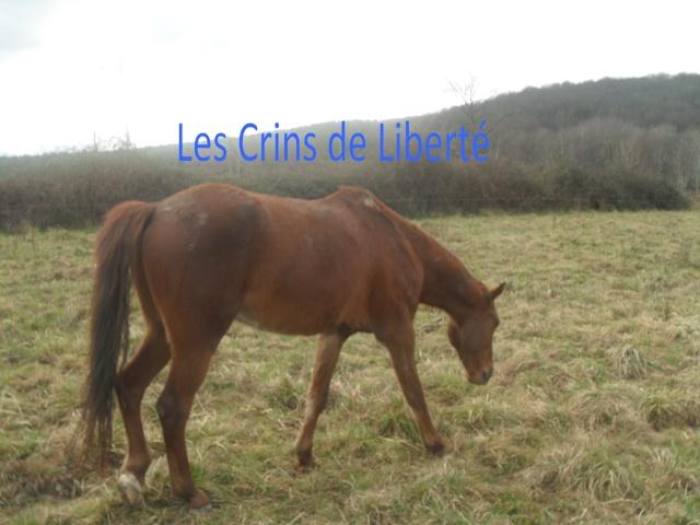 QUICKLY, poney New Forest PP, sauvé par Clémence64 !!!! (Mai 2013) - Page 5 Sdc11118