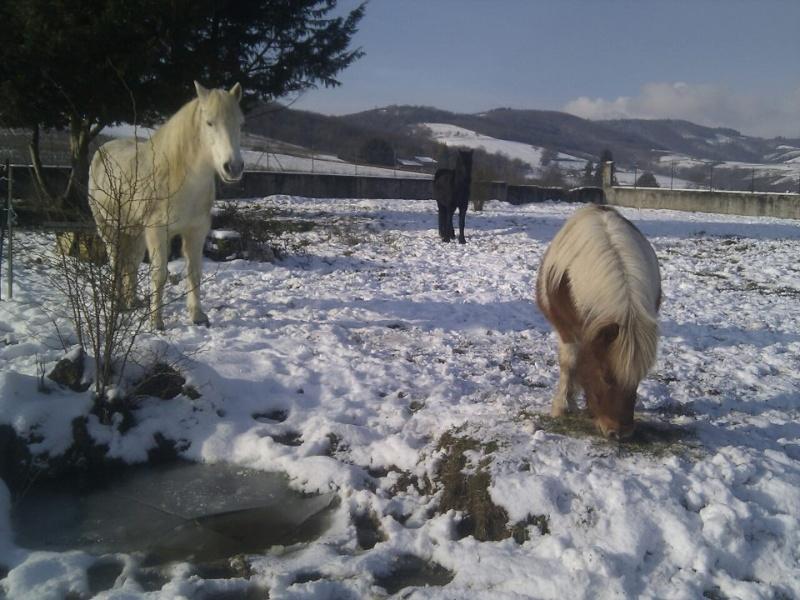 est -ce que vos chevaux jouent souvent? Chevau10