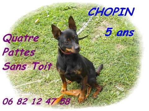Adoption Chopin 5 ans . 28226210
