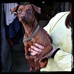 Adoption tupac né en 2003. Tupac10