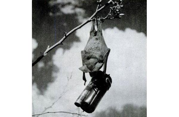 """ Bat bomb "" : les bombes chauves souris Batshi10"
