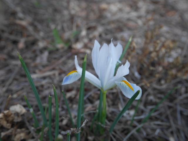 brins de printemps P1010110