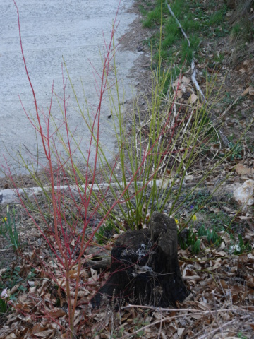 Ambiance et couleurs hivernales, décos naturelles - Page 2 P1010112