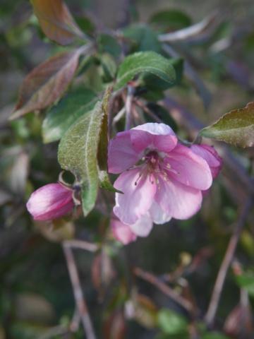 brassées fleuries P1010311