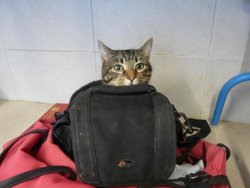 """scarlett joue à chat """"presque"""" caché P1060813"""