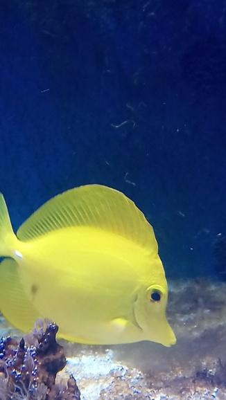 photos de poissons et coraux  - Page 2 Dsc_0213