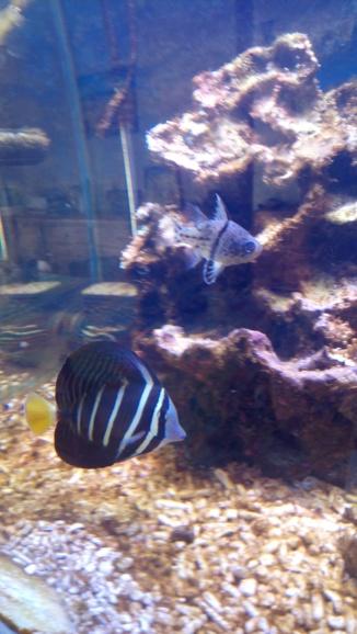 photos de poissons et coraux  - Page 2 Dsc_0214
