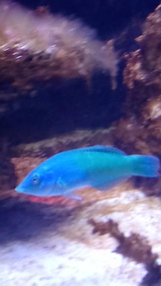 photos de poissons et coraux  - Page 2 Dsc_0215