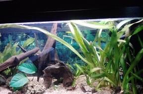 aquarium de 100litres P2212110