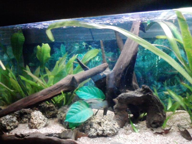 aquarium de 100litres P2212111