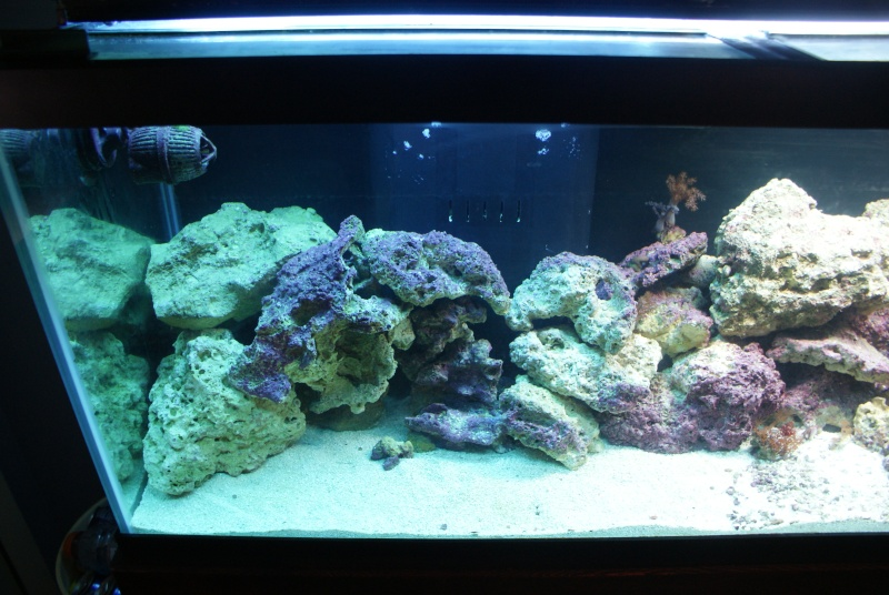 post your tank pics here every one loves pics  - Page 2 Dsc05216