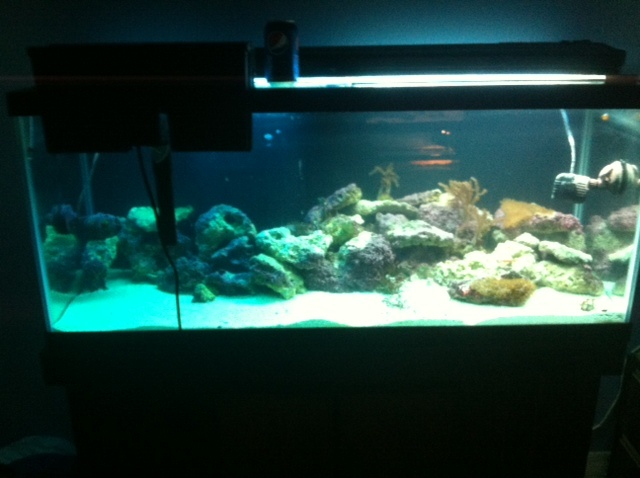 post your tank pics here every one loves pics  - Page 2 Tank_b10