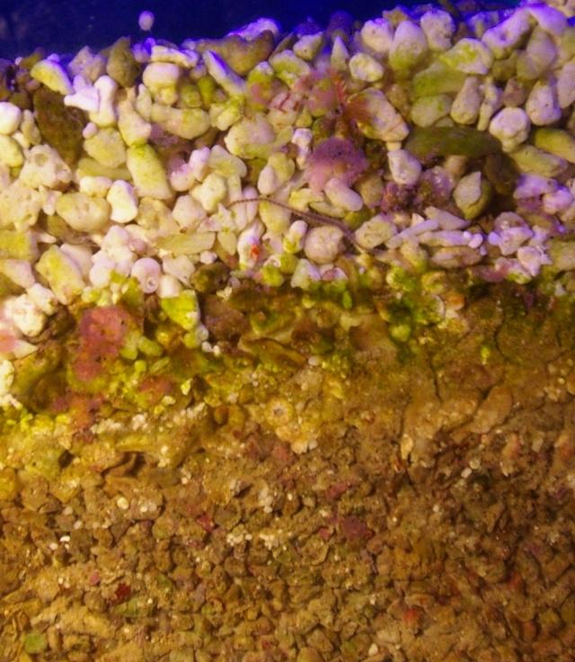 Les organismes vivants du sol Jaubert Soljau10