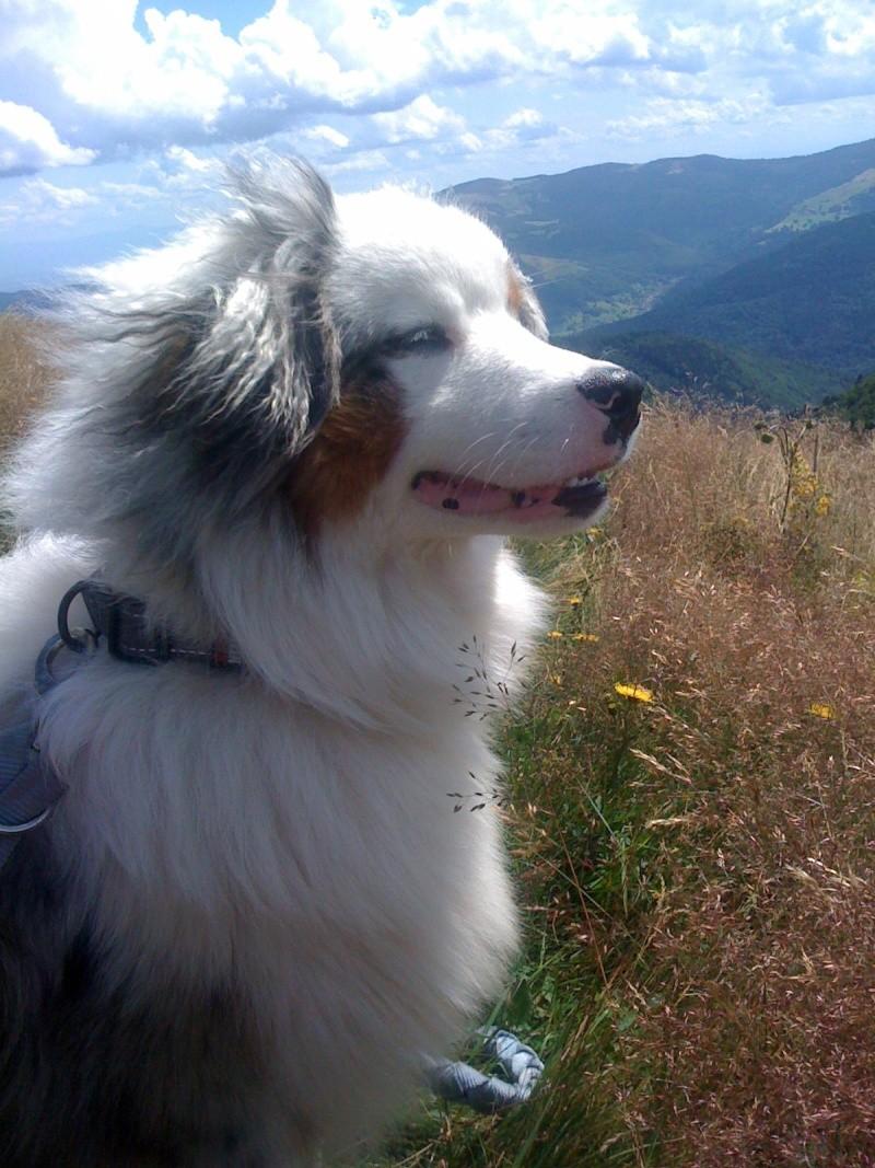Temps d'activité d'un chien (jeux? exercices?) - Page 3 Img_0710
