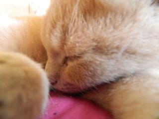 Concours de photo :) C'est par ici, on attend vos photos ... Cat11