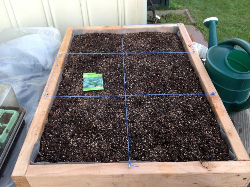 My first tabletop garden Photo_14