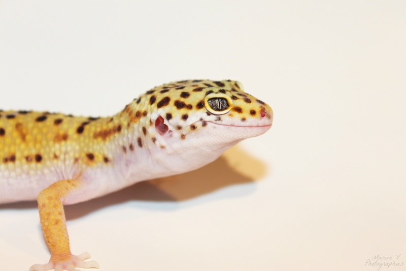 [Geckos Léopard] Krokmou, Mira et Pêche. Img_2011