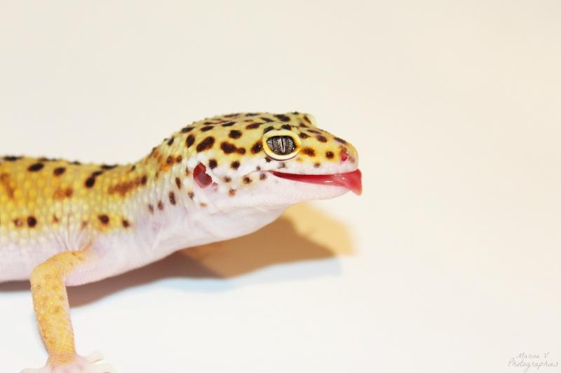 [Geckos Léopard] Krokmou, Mira et Pêche. Img_2012