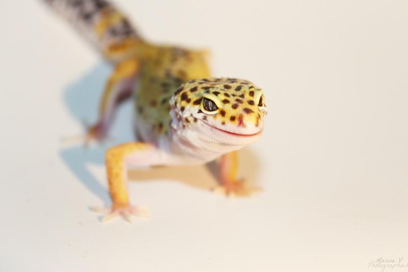 [Geckos Léopard] Krokmou, Mira et Pêche. Img_2013