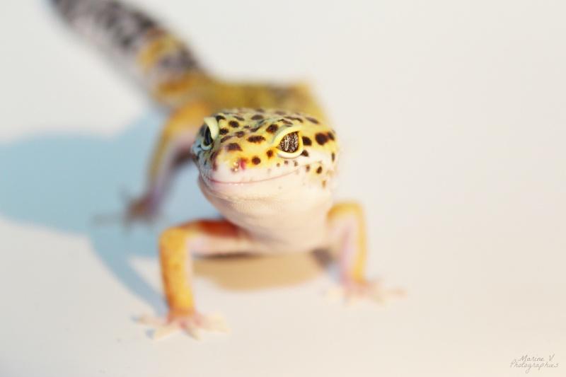 [Geckos Léopard] Krokmou, Mira et Pêche. Img_2014