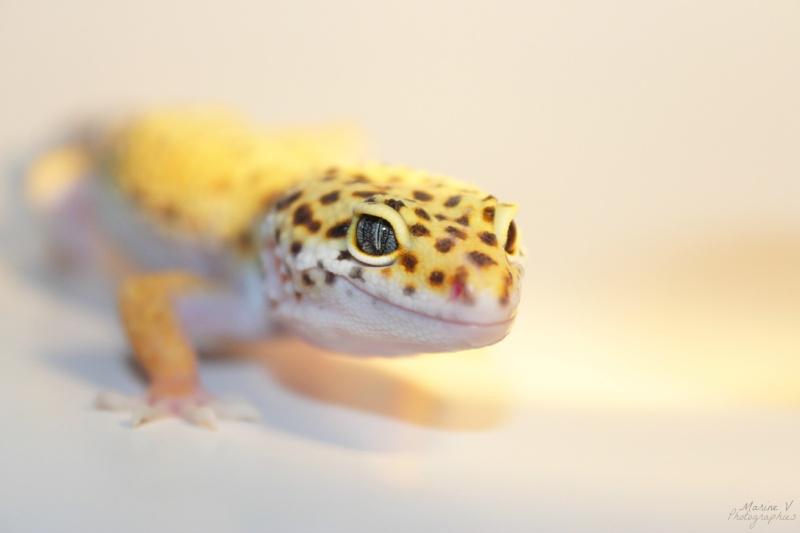 [Geckos Léopard] Krokmou, Mira et Pêche. Img_2015
