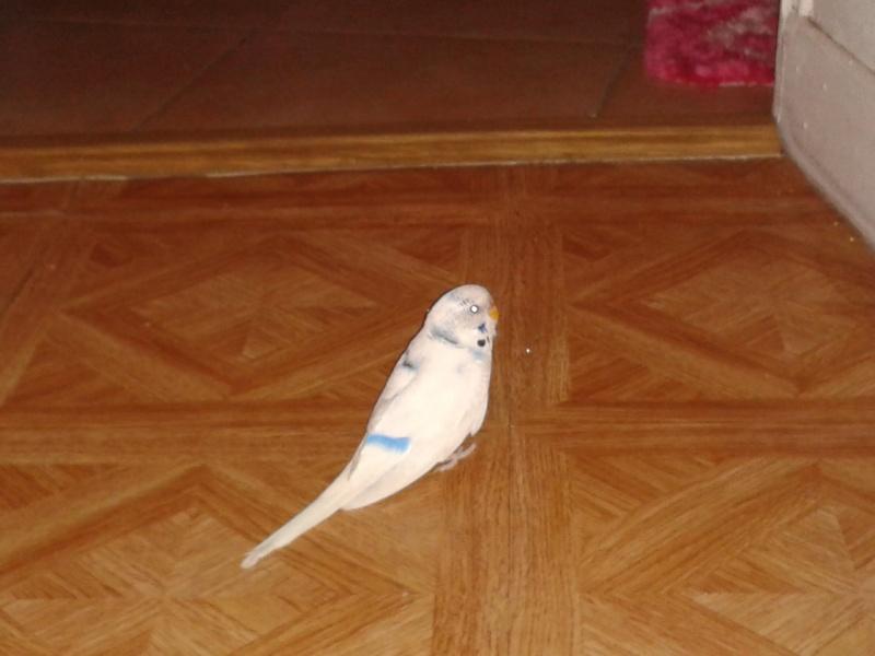 Je vous présente Pongo! 2013-014