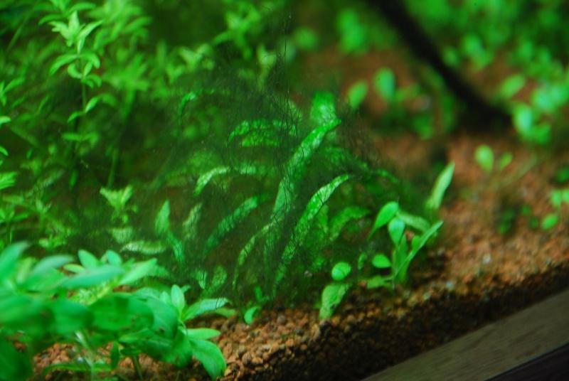 aquarium table basse (nouvel hardscape) - Page 4 Dsc_0114