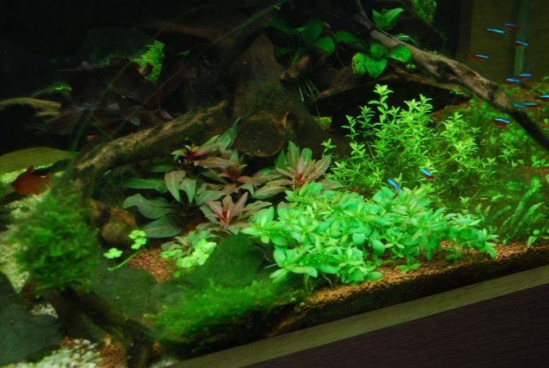 aquarium table basse (nouvel hardscape) - Page 4 Dsc_0116