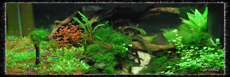 aquarium table basse (nouvel hardscape) - Page 4 Dsc_0117
