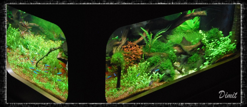 aquarium table basse (nouvel hardscape) - Page 4 Dsc_0118