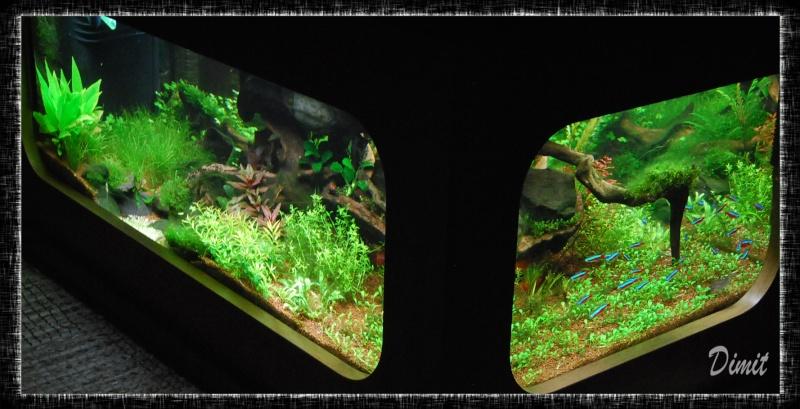 aquarium table basse (nouvel hardscape) - Page 4 Dsc_0119