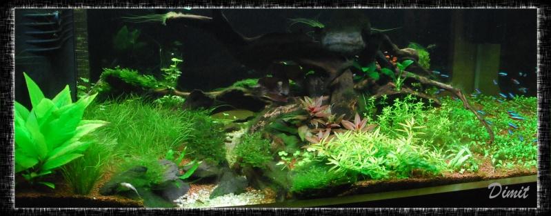 aquarium table basse (nouvel hardscape) - Page 4 Dsc_0120